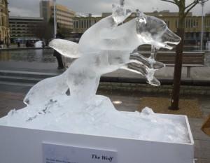 08 Wolf